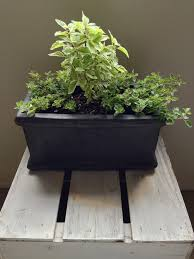 Kitchen Windowsill Herb Garden Secrets To A Thriving Indoor Herb Garden Zillow Porchlight