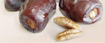 الاستخدامات العلاجية للتمر - فائدة التمر للدم - اهمية التمر للجسم coobra.net
