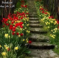 نتیجه تصویری برای عکس های طبیعت و گل