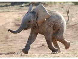 <b>BABY ELEPHANT</b> - mapcards.net