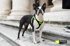 новости Oт <b>Ferplast</b> 2019:<b>шлейки</b> Kaori для <b>собаки</b> спортивный