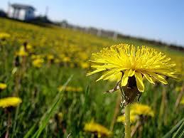 Le débat relancé par une étude récente: Les plantes ralentissent-elles le changement climatique ?