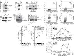Antiviral restriction factor transgenesis in the <b>domestic cat</b> | Nature ...
