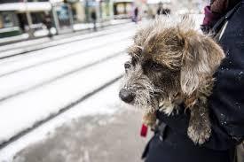 Resultado de imagen de mujer paseando a perro en calles nevadas