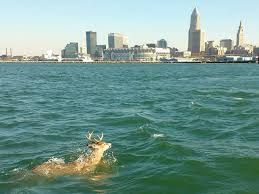 Lake Erie, Family Lore, Genealogy