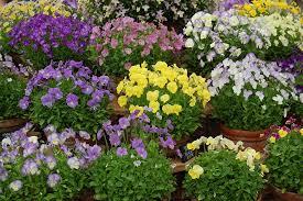 Αποτέλεσμα εικόνας για φυτα