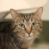 <b>Albert Wesker</b> | Pets Available | PAWS Chicago