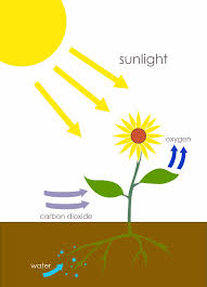photosynthesis essay on photosynthesis words photosynthesis