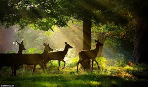 Image result for deer in the forest