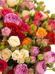 <b>Кустовые</b> розы - купить недорого с бесплатной доставкой в ...