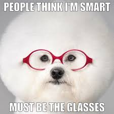 Must be the glasses #studious #dogswithfros #brainy | Funny Dog ... via Relatably.com
