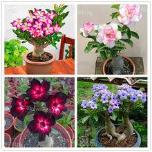 <b>Цветок</b> Пустыни – Купить <b>Цветок</b> Пустыни недорого из Китая на ...