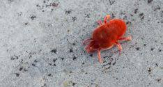 <b>Color Confusion</b> Living With Insects Blog <b>red color</b> insects - <b>Red</b> ...