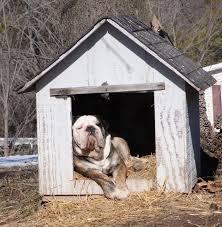 Πρωτότυπα σπίτια για τον σκύλο σας...