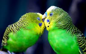 Resultado de imagen de foto aves exoticas