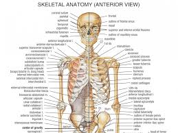 chest bones  s anatomy of the body bones human anatomy diagram    chest bones  s anatomy of the body bones human anatomy diagram