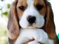 8636 best <b>Dogs</b> images on Pinterest   Fluffy <b>pets</b>, Adorable <b>animals</b> ...