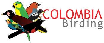 Resultado de imagen de Birdwatching Colombia