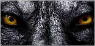 Risultati immagini per licantropi