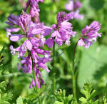 gand flower
