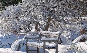 Imagini pentru grădină iarna
