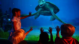 Image result for Finding Dory (2016)