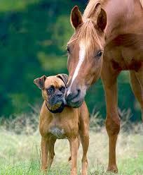 Παροιμίες με ζώα...