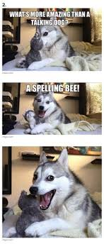Husky meme on Pinterest | Husky, Pun Dog and Pun Husky via Relatably.com