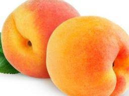 <b>Peaches</b>: Benefits, nutrition, dietary tips, and risks