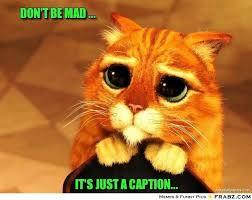 don't be mad ...... - Beggin' Cat Meme Generator Captionator via Relatably.com