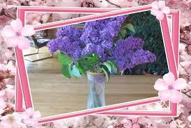 цветы | Записи в рубрике цветы | Дневник АниноН : LiveInternet ...