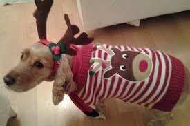 Image result for cats dressed in Christmas costumes