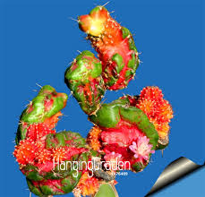 Online Shop <b>Big Promotion</b>!<b>100 pcs</b>/lot Ball cactus garden rare ...