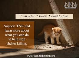 Feral cat | Natural History via Relatably.com