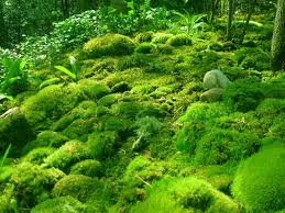 Image result for ground moss