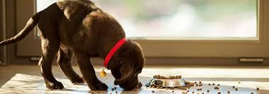 Холистик корма для собак и корма из <b>натуральных</b> ингредиентов ...