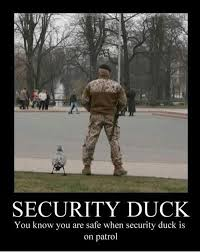 FunniestMemes.com - Funniest Memes - [Security Duck You Know You ... via Relatably.com