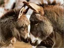 """Résultat de recherche d'images pour """"gifs d'ânes"""""""