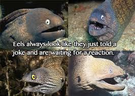 Image - 234807] | Bad Joke Eel | Know Your Meme via Relatably.com