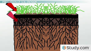 what is soil erosion    definition and causes   video  amp  lesson    soil erosion  effects  amp  prevention