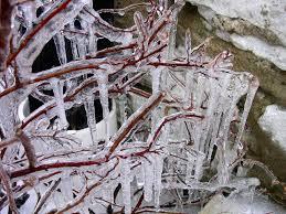 <b>icicle</b> - Wiktionary