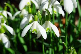 Image result for signs of spring