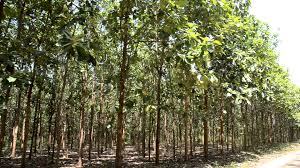Image result for Tree plantation