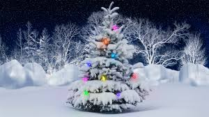 Image result for christmas winter photos