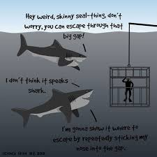 20 Funniest Shark (Week) Memes Gifs And Comics | WeKnowMemes via Relatably.com