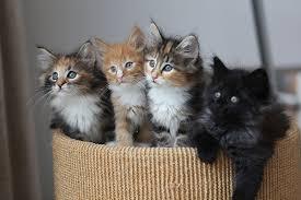 Image result for basket of kittens