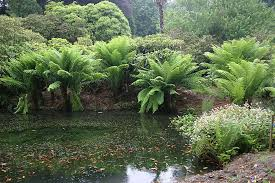Image result for fern gardens