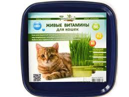 <b>растение bontiland</b> живые витамины для кошек овес 410671 ...