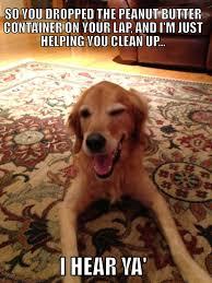 I am starting a new meme: The Overly Suggestive Golden Retriever ... via Relatably.com