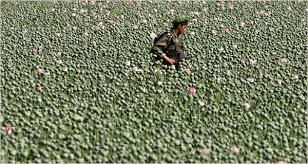 Image result for afghan drugs